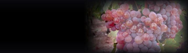 Niche Wine Specialists
